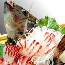 自家養殖の摩周鯛