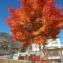 *日光の秋旅♪