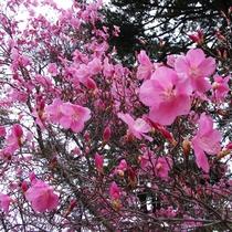*春の奥日光