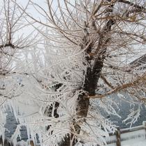 まるで氷のアート 樹氷をご覧ください