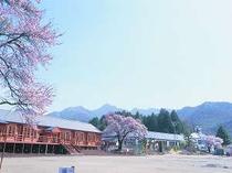 桜の美しい三代校舎