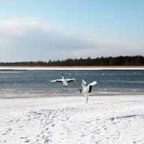 *風連湖/近くにネイチャーセンターがあるので、展示や参考図書を見ることができます。
