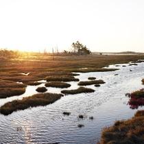 *春国岱/広大な敷地面積はなんと約600ha!!湿地及び原生林です。
