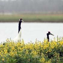 *風連湖/風蓮湖は直接、根室湾に面している湖なので、湖岸には多様な生物が生息しています。