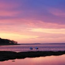 *風連湖/ご希望の方には、自然を知り尽くした当館主人がオススメ撮影スポットをお教えします!