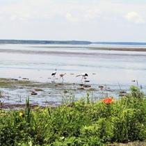 *風連湖/日本の湖沼では14番目の面積規模を誇ります。