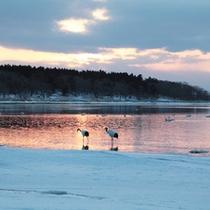 *風連湖/美しい夕焼けと共に、野鳥を観察することができます。