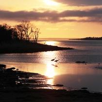 *風連湖/白鳥やタンチョウ鶴、オジロワシなどの野鳥が訪れるエリアです。