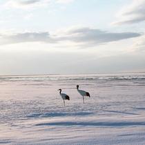 *風連湖/野鳥好きにはたまらない空間!動植物の息遣いを感じながらお過ごしいただけます。