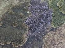 綺麗な珊瑚の広がる世界