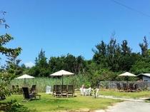 明星荘の南の島らしい広いお庭