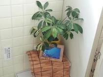 男性用お手洗いの観葉植物