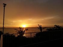 夕陽と椰子の木