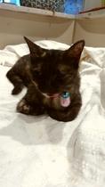 外猫マロさん