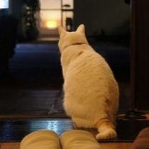 ミィちゃん 本日最後のお客様を待ってます。