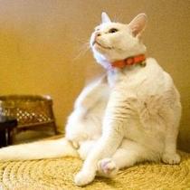 看板猫のミィちゃん。スヤスヤ眠る姿がリピーターさんに大人気♪