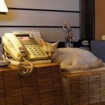 ミィちゃん お電話待ってますzzz