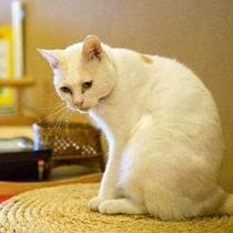 看板猫のミィちゃん。帳場の座布団でのお昼寝がお気に入り♪