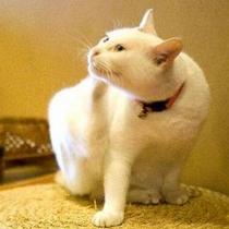 看板猫のミィ。
