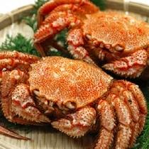北陸で水揚げされる「毛蟹」