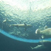 皆さん、上を見てください。まるで海の中にいるかのようで、たくさんの魚達を見ることができますよ♪