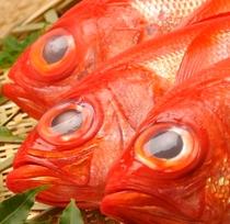伊豆金目鯛アップ 宿自慢のこだわり食材です