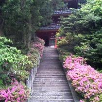 【季節の花】 つつじ 松尾寺