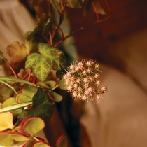 館内を彩る草花