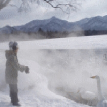 *釧路川の魅力(冬)/間近で野鳥観測を楽しめます。