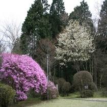 春☆到来!