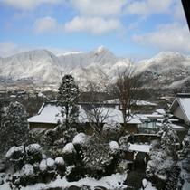 仙石原の冬