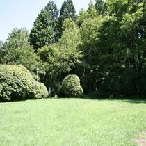 新緑の季節の芝生