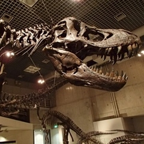 国立科学博物館