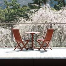 ホテル庭園しだれ桜