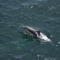 ◆伊勢湾フェリー イルカのイメージ