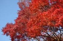 紅葉の霧島連山