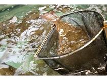 地魚の活き造り