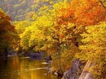 【秋真っ盛りの『錦仙峡』】