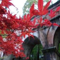 ■南禅寺 紅葉