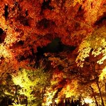 ■永観堂 紅葉 ライトアップ