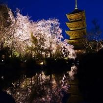 ■東寺 桜 ライトアップ