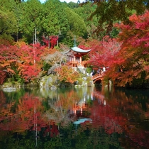 ■醍醐寺 紅葉