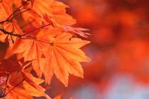 秋は特にお散歩の季節