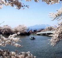 がりゅう公園桜 500