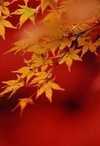 養老渓谷の紅葉6