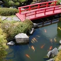 庭と池の鯉
