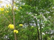 花と緑に囲まれた「ペンション青葉」です⑧