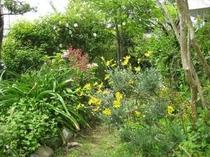 花と緑に囲まれた「ペンション青葉」です⑦
