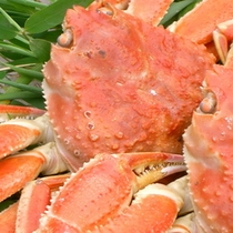 【蟹】自家茹で本ズワイ蟹01