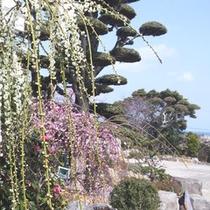 【宿の庭】